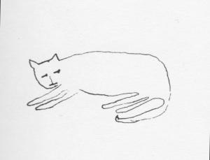 nb cat