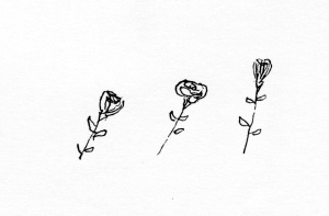 nb roses